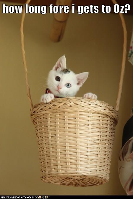 wizard of oz kitten cute Cats - 8265234944