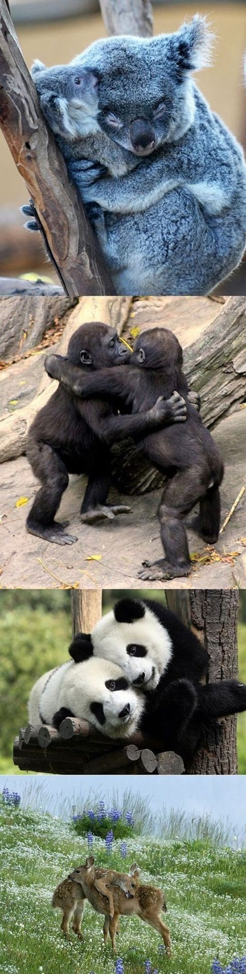 animals cute hugging squee - 8265277696