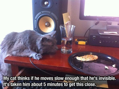 Cats funny sneaky noms - 8265298176