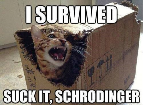 Cats,funny,schrodinger,g rated,School of FAIL