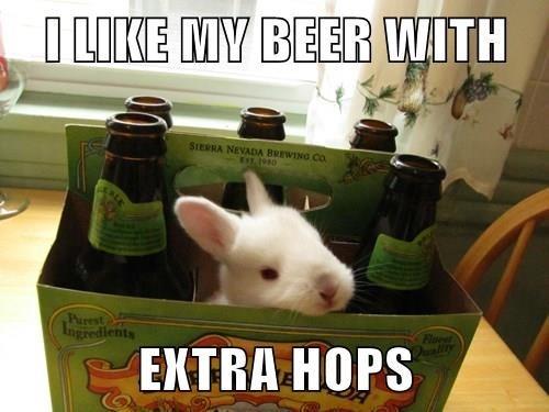 beer cute puns
