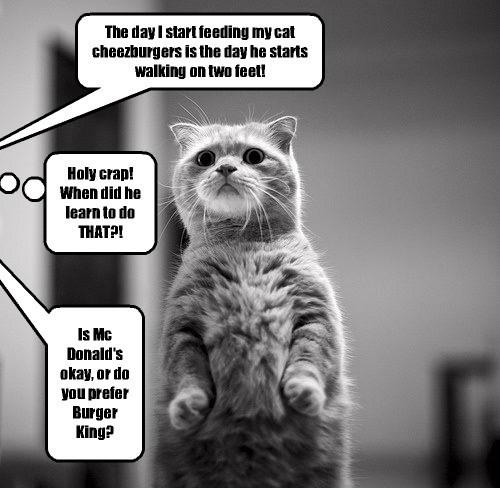 Cats cheezburger noms - 8265370368