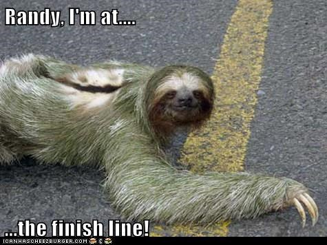 race,sloths,slow