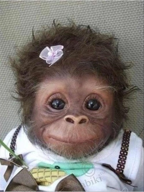 Babies apes cute eyes primates monkeys squee - 8265730816