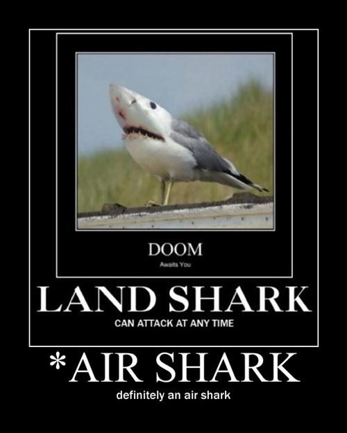 shark,bird,funny