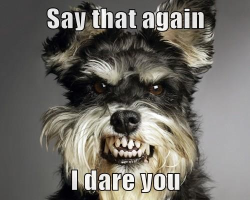 dogs say again dare caption - 8265870848
