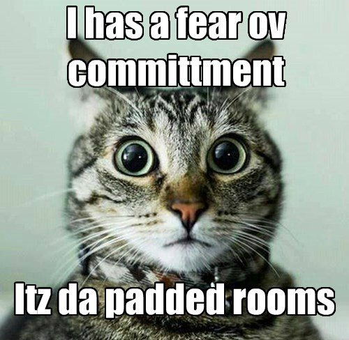 Cats crazy funny puns - 8266067712