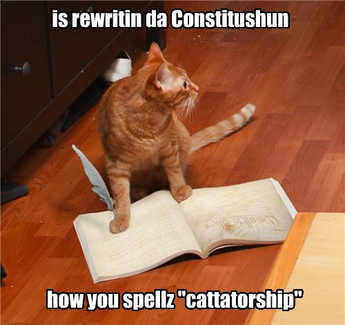 Cats cute constitution - 8266160384