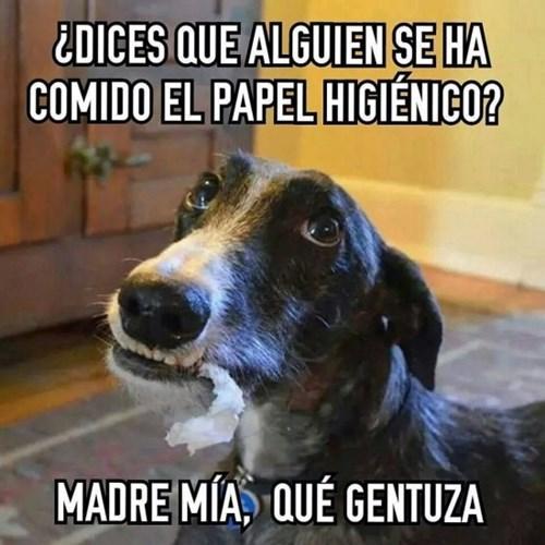 bromas perros Memes animales - 8266181888
