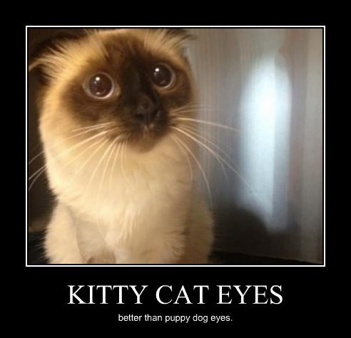 Sad eyes Cats funny - 8266227456