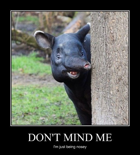 nosey tapir funny animals