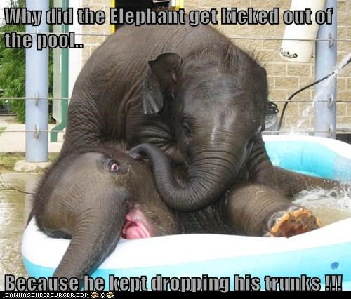 elephants jokes puns