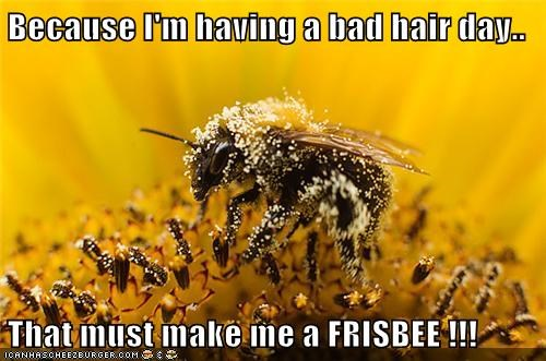 Because I'm having a bad hair day.. That must make me a FRISBEE !!!