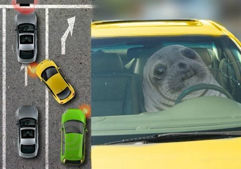 awkward seal,driving,traffic