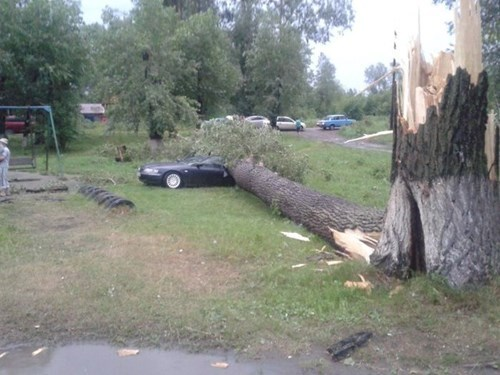 cars whoops trees - 8266464256