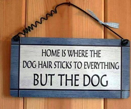 dog hair dogs signs