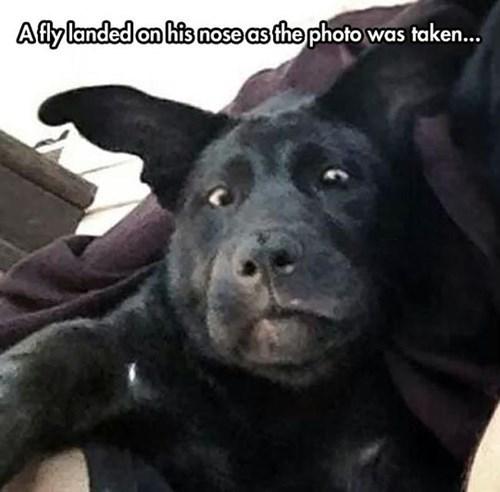 dogs flies photograph - 8266484480