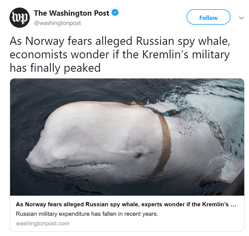 Norway russia spy whale - 8266501