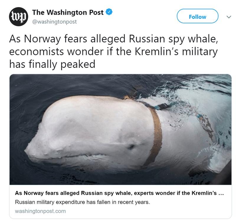 russian whale spy