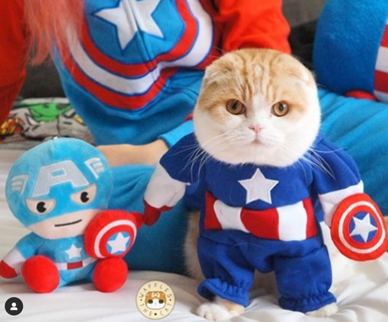 cosplay instagram marval Cats avengers - 8266757