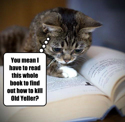 dogs books Cats funny - 8266840064