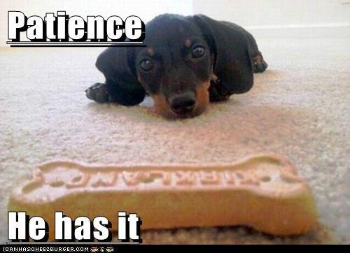 dogs bones patience good boy caption funny - 8267082496