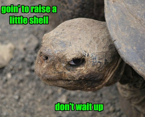 goin' to raise a little shell don't wait up