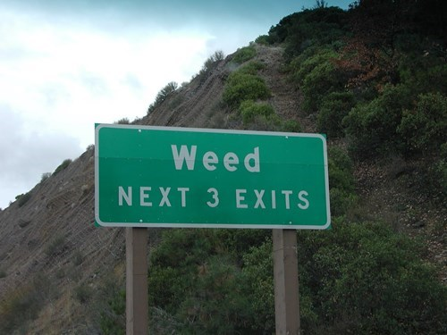 drugs funny sign weed