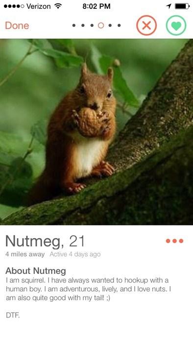 funny online dating wtf squirrel tinder - 8267444736