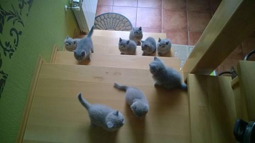 cute litter kitten squee - 8267503616