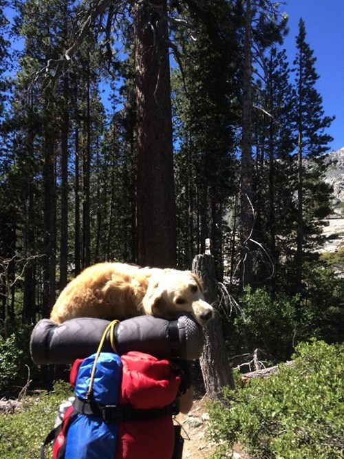 camping,dogs,Hiking,tired