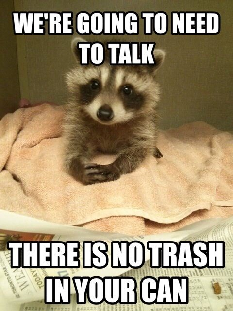 trash cute raccoons - 8267547648