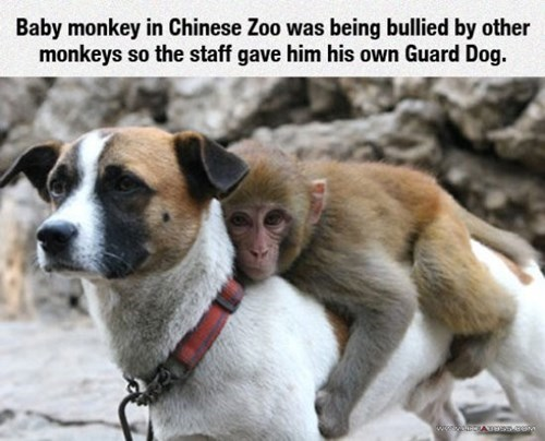 Monkey's Best Friend