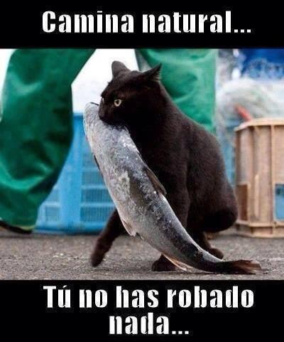 Memes animales gatos bromas - 8267556352