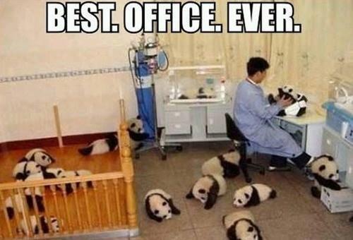 cute panda puns - 8267592192