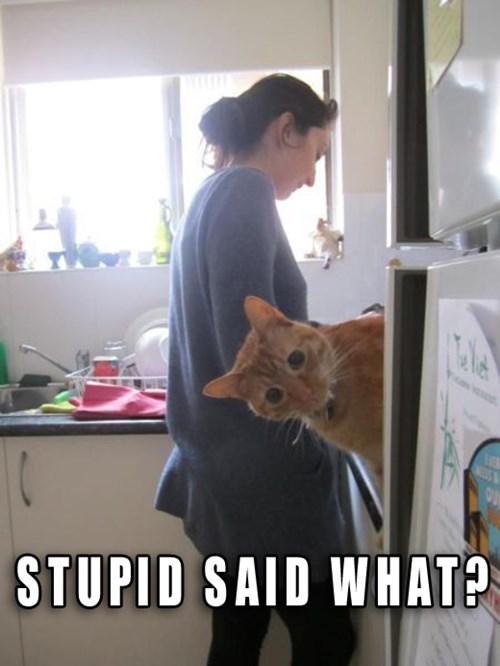 Cats jokes sneaky - 8267595776