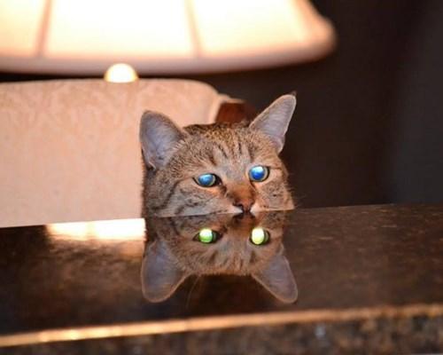 Cats envy eyes green - 8267612672