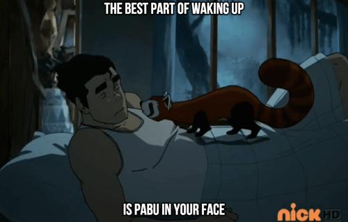 pabu,cartoons,Avatar,korra