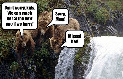 bears fishing funny