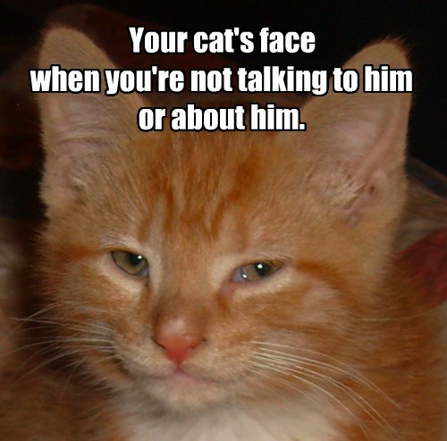 Cats cute fuzzy - 8269290496