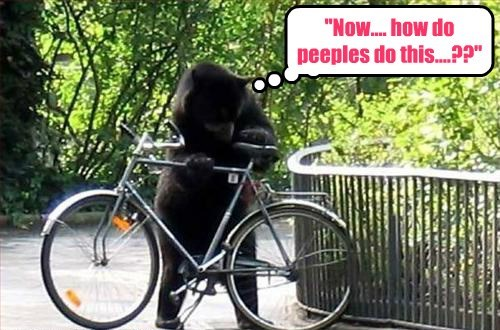 bears bicycles