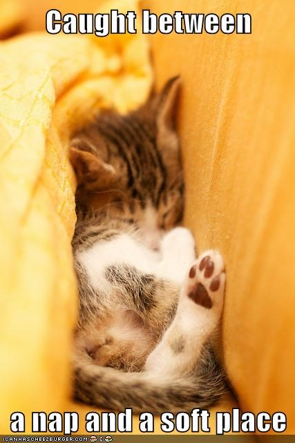 Cats cute kitten napping fuzzy - 8269415936