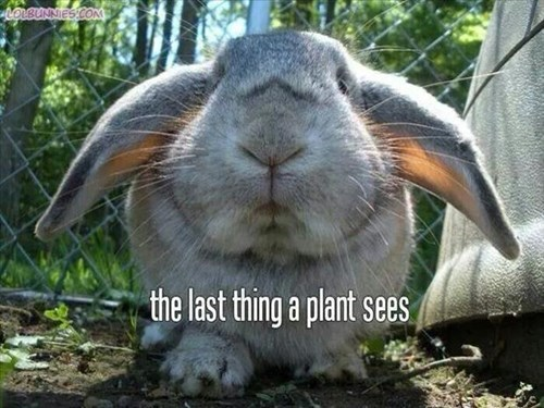 gardening rabbits plants scary