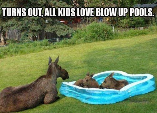 summer moose swimming pools
