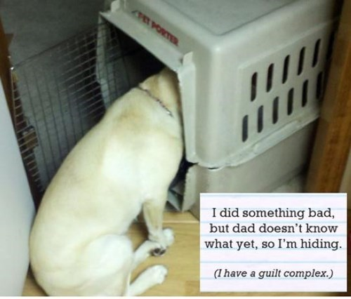 cute dogs guilty - 8269501440