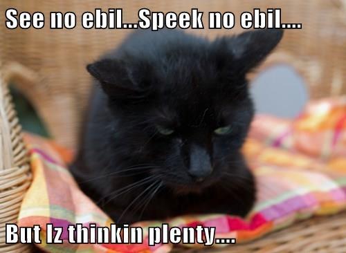 Cats cute basement cat evil funny - 8269538816