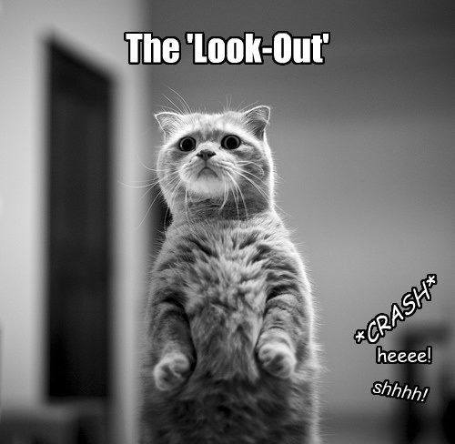 lookout Cats funny - 8269675264