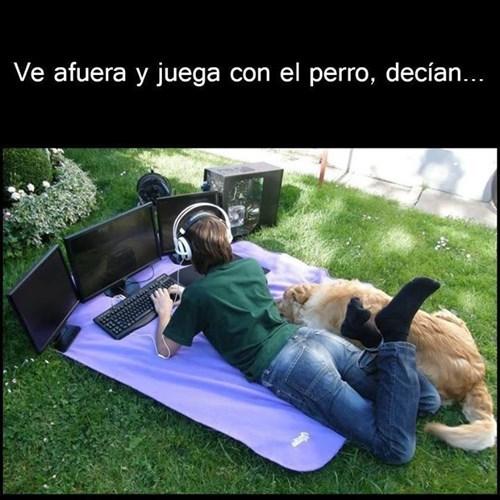 bromas perros Memes animales - 8270185472