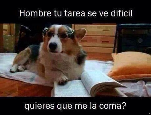 bromas perros Memes animales - 8270190848