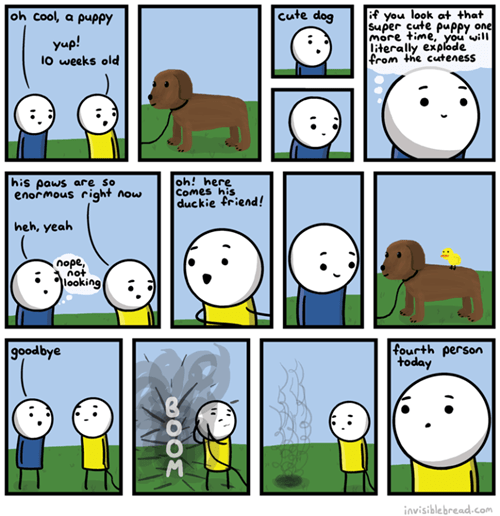 dogs ducks boom web comics - 8270228480